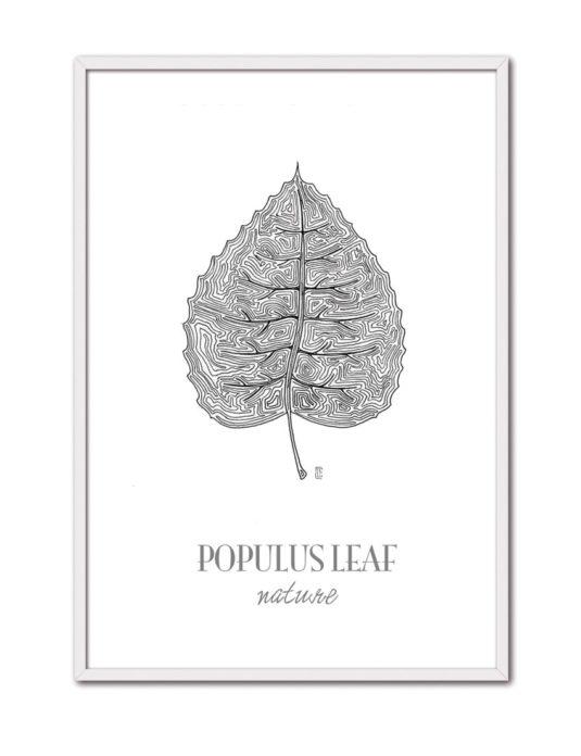 Populus CE44 BL-min