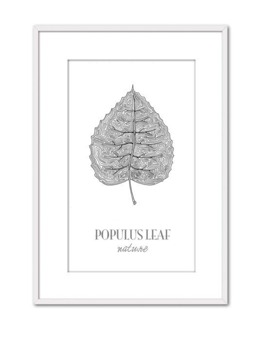 Populus CE44 PPT BL-min
