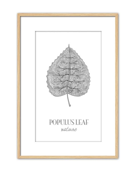 Populus CE44 PPT NT-min
