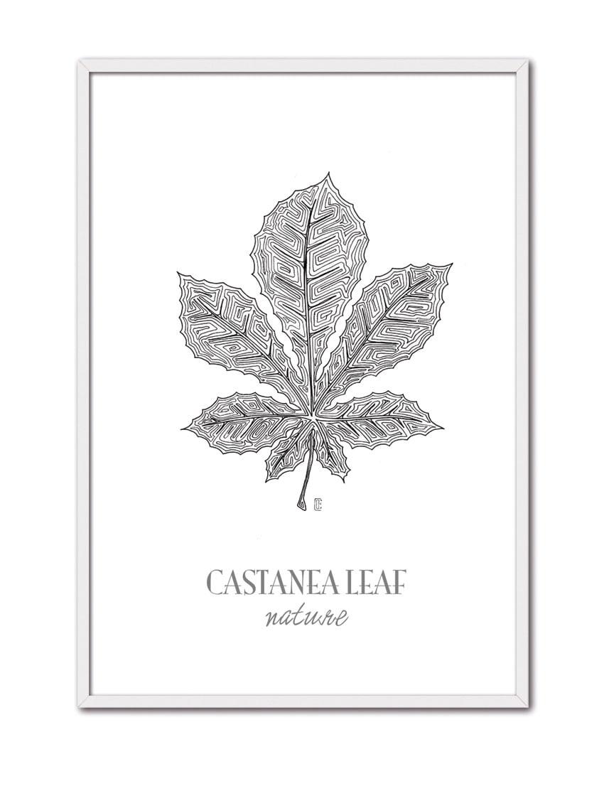 Castanea CE46 BL-min