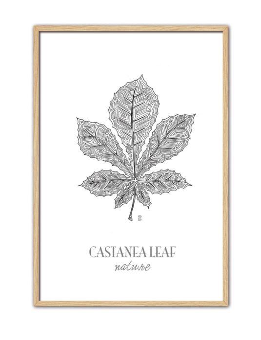 Castanea CE46 NT-min