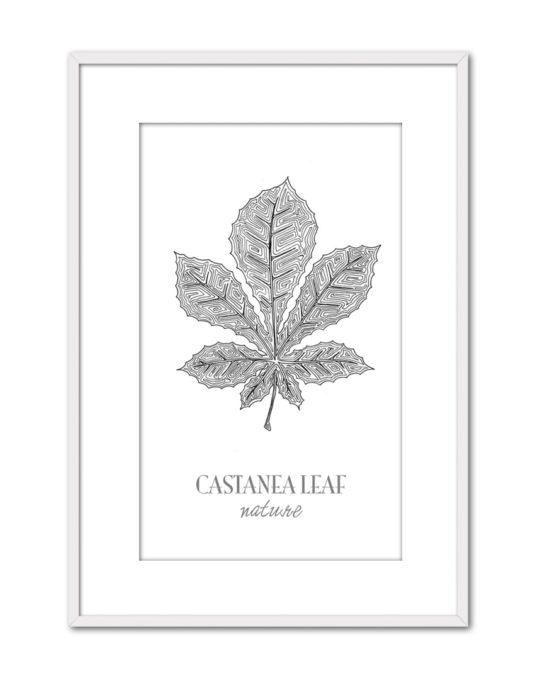 Castanea CE46 PPT BL-min