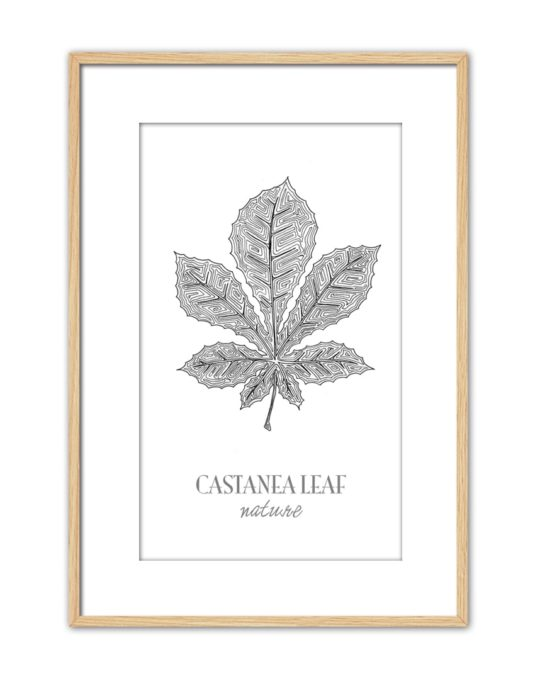 Castanea CE46 PPT NT-min
