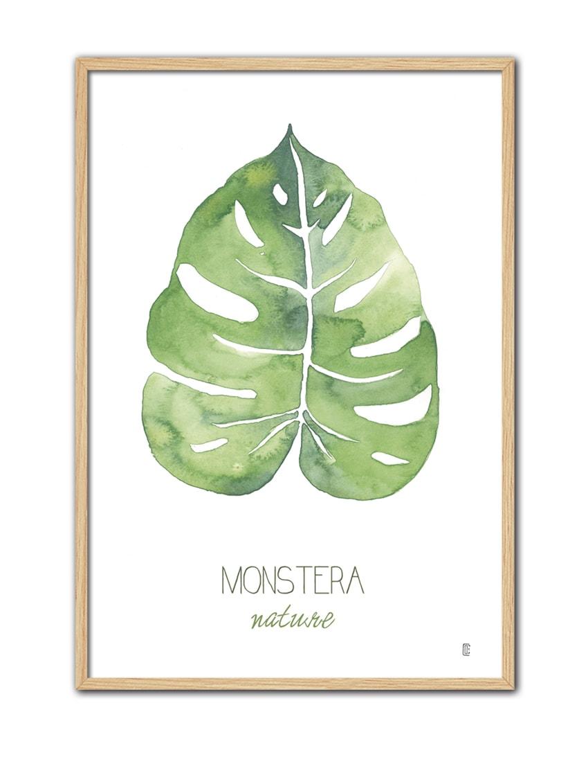 NATURE MONSTERA CE52 NT-min