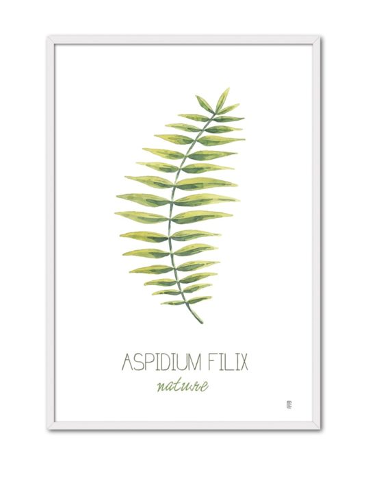 NATURE ASPIDIUM CE54 BL-min