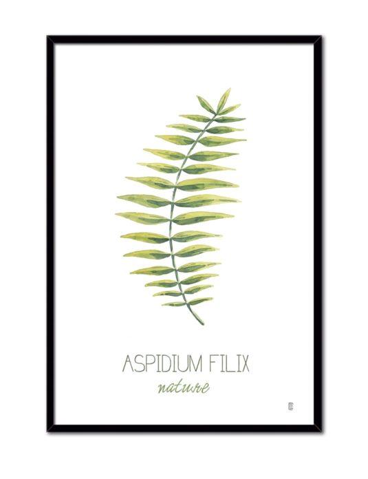 NATURE ASPIDIUM CE54 NE-min