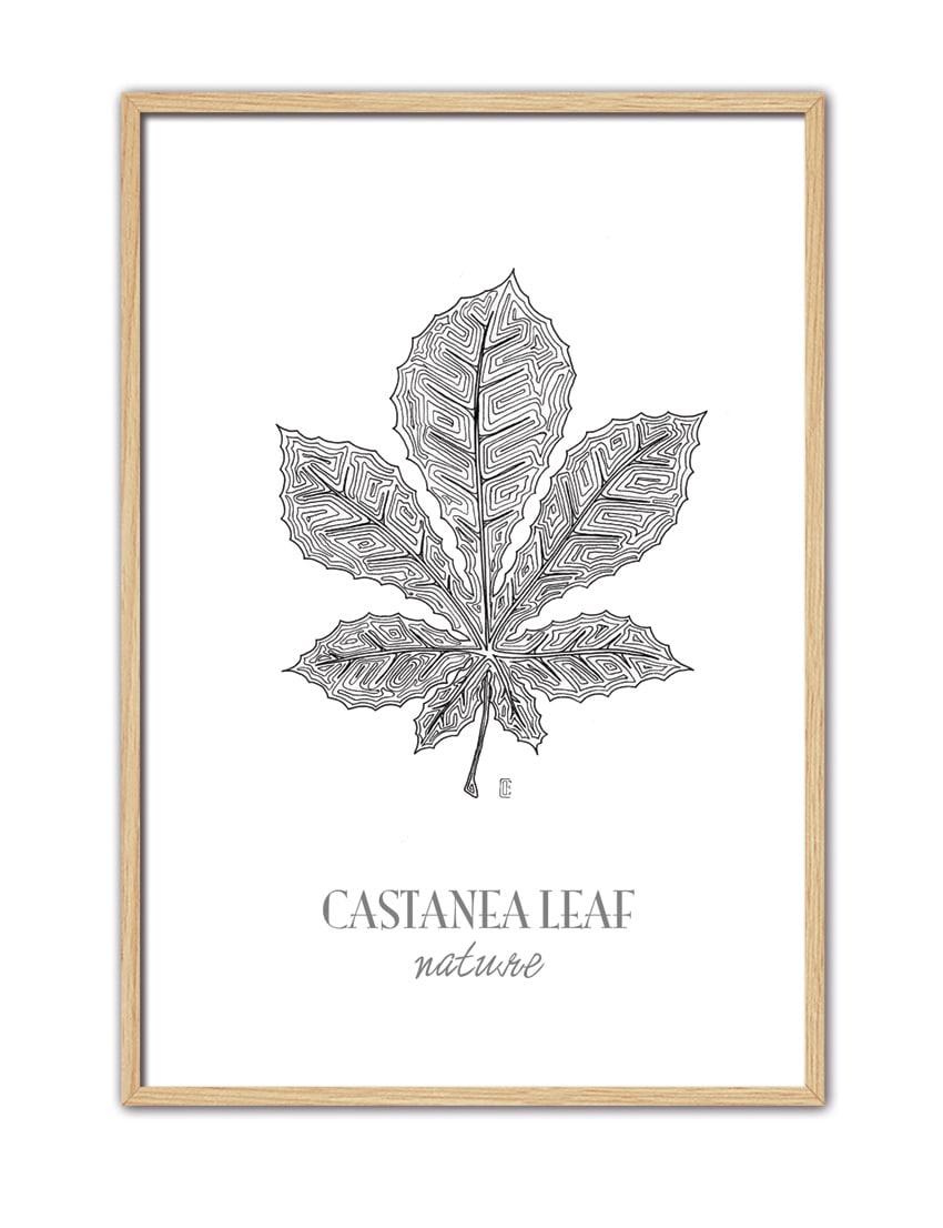 CASTANEA LEAF