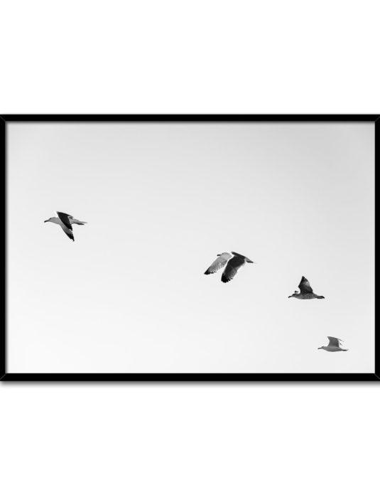 Cuadro de pájaros en vuelo