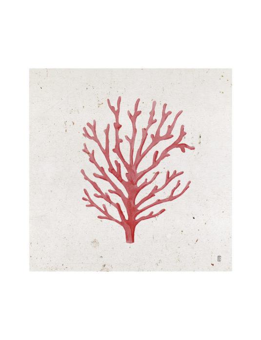 CE351 535x696 - Planta Coral II