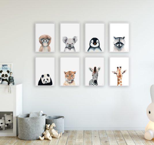 AMB ANIMALITOS min 535x503 - Koala Portrait