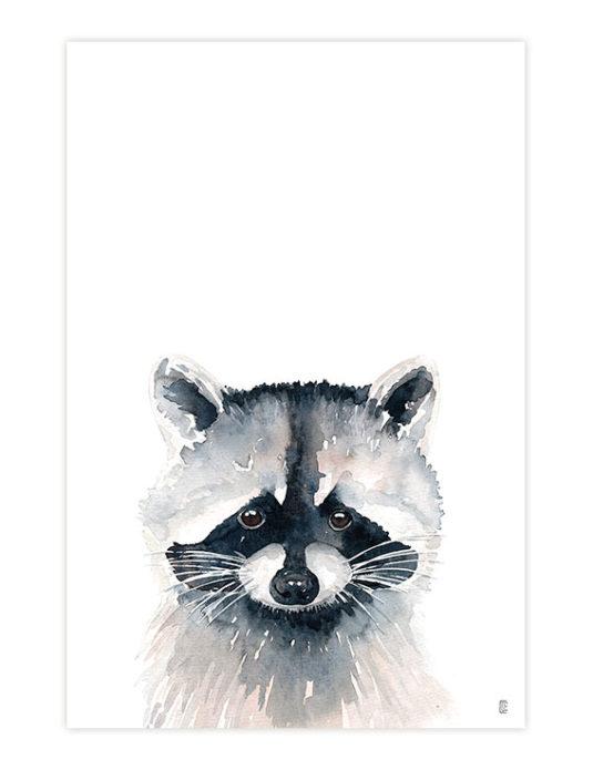 CE325 MAPACHE 535x695 - Raccoon Portrait