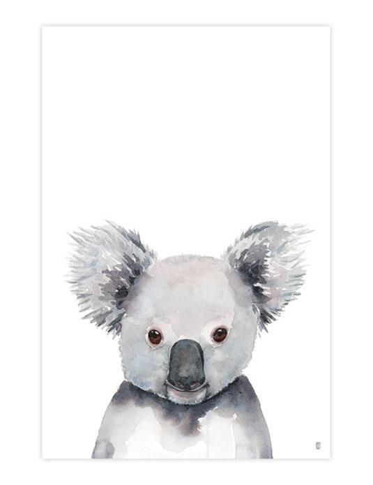 CE373 KOALA 535x695 - Koala Portrait